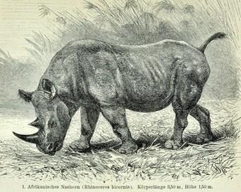 1895 Vintage Print of Rhinos - Antique German Engraving of Rhinos / Rhinoceros