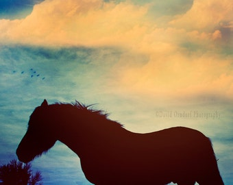 Equine, Horse Photo, Horse Portrait,  Horse Photography, 8x8 in Fine Art Print,  Horse resting In Sunset, 7 birds.