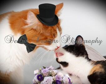 Crazy Cats Photo Card -Wedding Kisses
