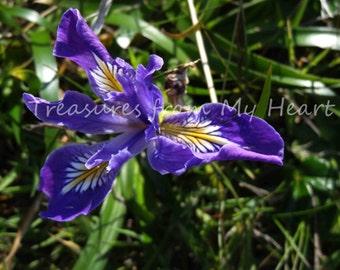 Fine art photography Wild Iris, digital download