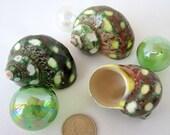 Sea Shells for Beach Decor - Nautical Seashells,  Spotted Green Turbo, 1PC