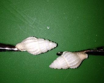 2 Seashell Hair Clip Accessory Wedding Bride Bridesmaid Nassa Sea Shells