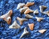 40 Fossil sharks teeth Wire wrap, jewelry, healing mixed sizes, tribal, men's jewelry, hawaiian hawaiiana tiki