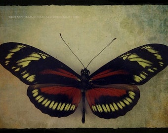 BUTTERFLY Eye Bright Abstract  Original Color Art Photograph