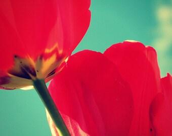 Tulips Photograph, Red Flower Art, Garden Home Decor, Floral Art, Red Blue Wall Decor, Spring