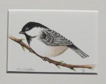 Fine Art Print - Chickadee -  Bird - Watercolor ACEO with Mat - Artist Signed