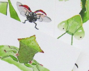 Six Bug Portrait Postcards, quotations on back, 4 in x 6 in, silky smooth, bug lover's gift