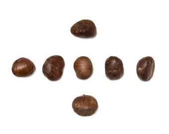 Food Photography, Chestnuts, Brown, White, Kitchen Wall Art, Christmas, Kitchen Print, Modern