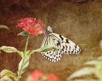 Butterfly art, Childrens room, nursery decor, nature photography,  kids art print,
