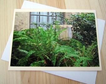 Overgrown Garden Vivid Photography
