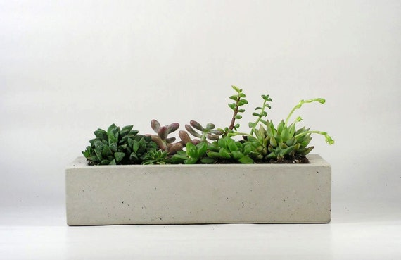 Concrete Tray/ Concrete Planter
