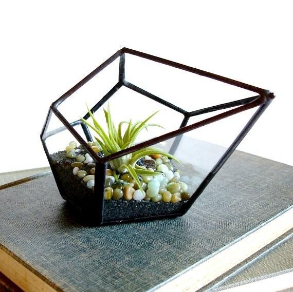 Petit terrarium pod avec air plante planteur g om trique - Petit terrarium ...