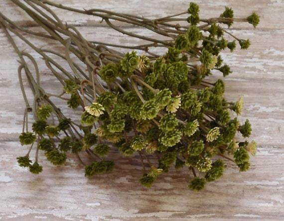 GREEN Plastic Baby's Breath - Gypsophila - Artificial Flowers, Greenery, Filler