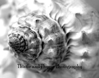 Sea Shell Photographic Art Print - 5x7 Black and White Photograph