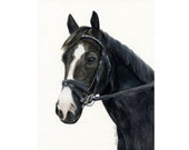 Custom Horse Portrait Painted from your Photos- Original Watercolor Painting by Julia Raven -10x8inches