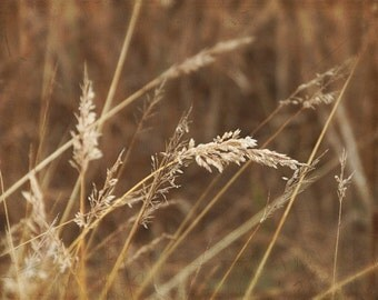 Wisp Weeds - Winter Photography, ombre shades of brown wall decor, prairie grass, shabby chic, cottage house, 8x10 photo, calm serene