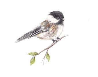 Chickadee Illustration, digital download