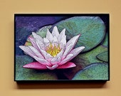 "5x7"" - Fine Art Photography FRAMED print. Pink Lotus water lily - digital drawing. Elegant black frame. Home / office decor, photo canvas"