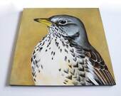Fieldfare Woodland Bird Painting, oversize portrait, 18x18 square canvas wall art