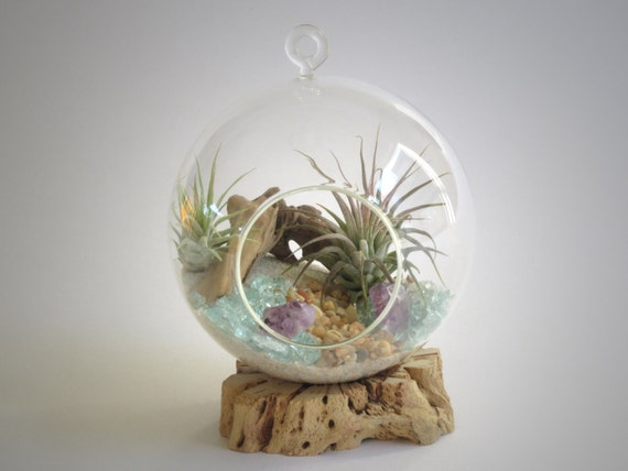 Air Plant Terrarium - Hanging Globe with Living Tillandsia Plants, Sand, Amethyst Crystals and Other Treasures - Wonderful Gift