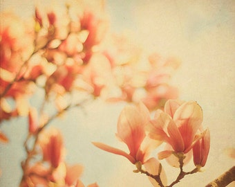 Nature Photography Flower Wall Art: Springtime Nostalgia color photo home decor, tree wall art, Pink Magnolias Flower art print