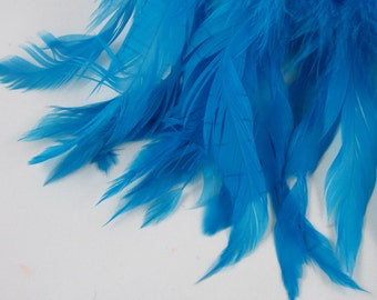 teal blue feathers  Schlappen 6 to 8 inches  SCH-15