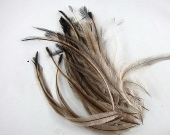 Emu Feathers 40 3 to 6 inches k154