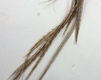 12 natural Taupe grizzly thin hair Feathers 6 to 8 inches  K108
