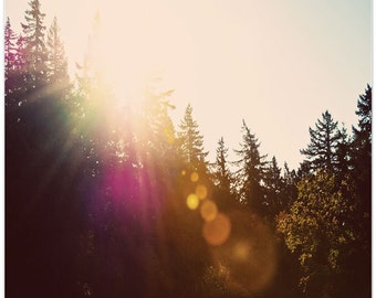 Woodland forest, tree photography, textures, lorax inspired, earth day, sunlight, fine art print