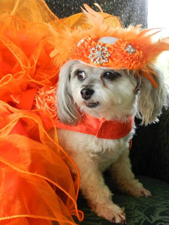 Dog Dress  XS Orange   By Nina's Couture Closet