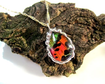 Sunset Moth Sterling Silver Necklace, Real Butterfly Jewelry