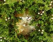 Boxwood Wreath - Spring  Wreath , Fern Wreath - Front Door Wreath-Year Round