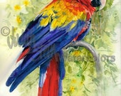 "Parrot Zoo Rainforest Bird, Red, Yellow, Blue Parrot in Green Tree Leaves Watercolor Painting Print, Wall Art, Home Decor, ""Scarlet Macaw"""