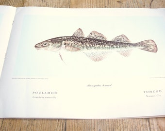 1955 Fishes of Quebec Dept of Fisheries Reference on Cod Fish Great Graphics Poissons du Quebec