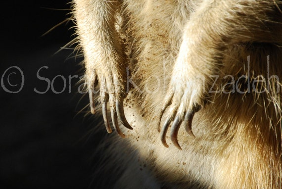 Items similar to Meerkat Claws on Etsy