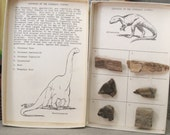 Vintage Fossil Collection from Dinosaur Country - Odd Bits / Assemblage