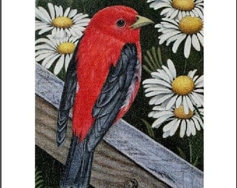 Scarlet Tanager ACEO Art Print