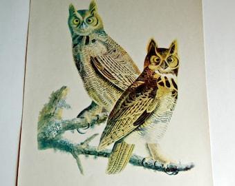 Audubon Bird Print For Framing The Great Horned Owl Print 1940's Birds of America