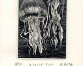 2 Jelly fish