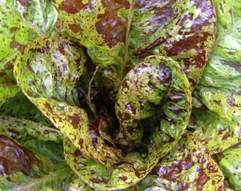 SALE! Freckles Romaine Lettuce Organic Heirloom Excellent Sweet Flavor and Crisp Texture Rare Seeds