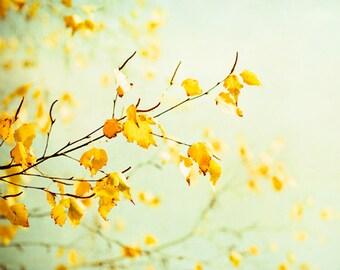"Fine Art Photography - mint green yellow photo pale wall art nature print branch leaves botanical - 16x20, 11x14, 8x10 Photograph, ""Tender"""