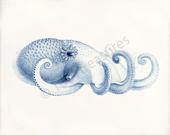 Octopus Art Print - Octopus Blue 3 - Ocean Decor - Beach Decor - Natural History