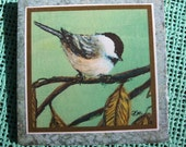 Chickadee Tile Print from Set 10, Bird 1 - 6 X 6 inch tile ready to hang