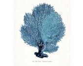 Coastal Decor Sea Fan Sea Coral Giclee Art Print 8x10 Coastal Blue
