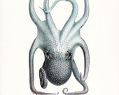 Vintage Octopus Natural History Beach Style Giclee Art Print, 8x10 - 2 color choices