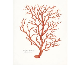 Coastal Decor Branch Sea Coral Nautical Giclee Art Print 8x10 Coral