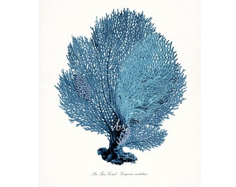 Coastal Decor Sea Fan Sea Coral Giclee Art Print 8x10 Coastal Blue