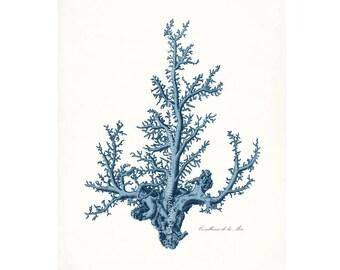 Coastal Decor Antique Pacific Sea Coral Giclee Art Print 8x10 Coastal Blue