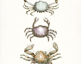 Three Antique French Crabs Natural History Giclee Art Print 8x10