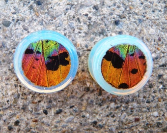 "Real Moth Wing Plugs - 0G-1"" choose your own size - Sunset Moth, Real Butterfly Plug, Butterfly Jewelry, Butterfly Gauges"